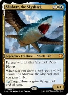 Shabraz+the+Skyshark+C20